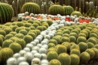 Xiamen, ogród botaniczny, kaktusy