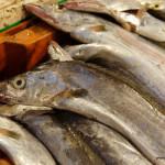 Targ w Shishi – sekcja rybna