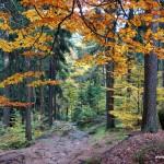 Jesienny las w Górach Stołowych