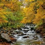 Jesień nad potokiem Wilczka