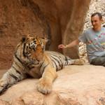 Tygrysia atrakcja czy ściema?