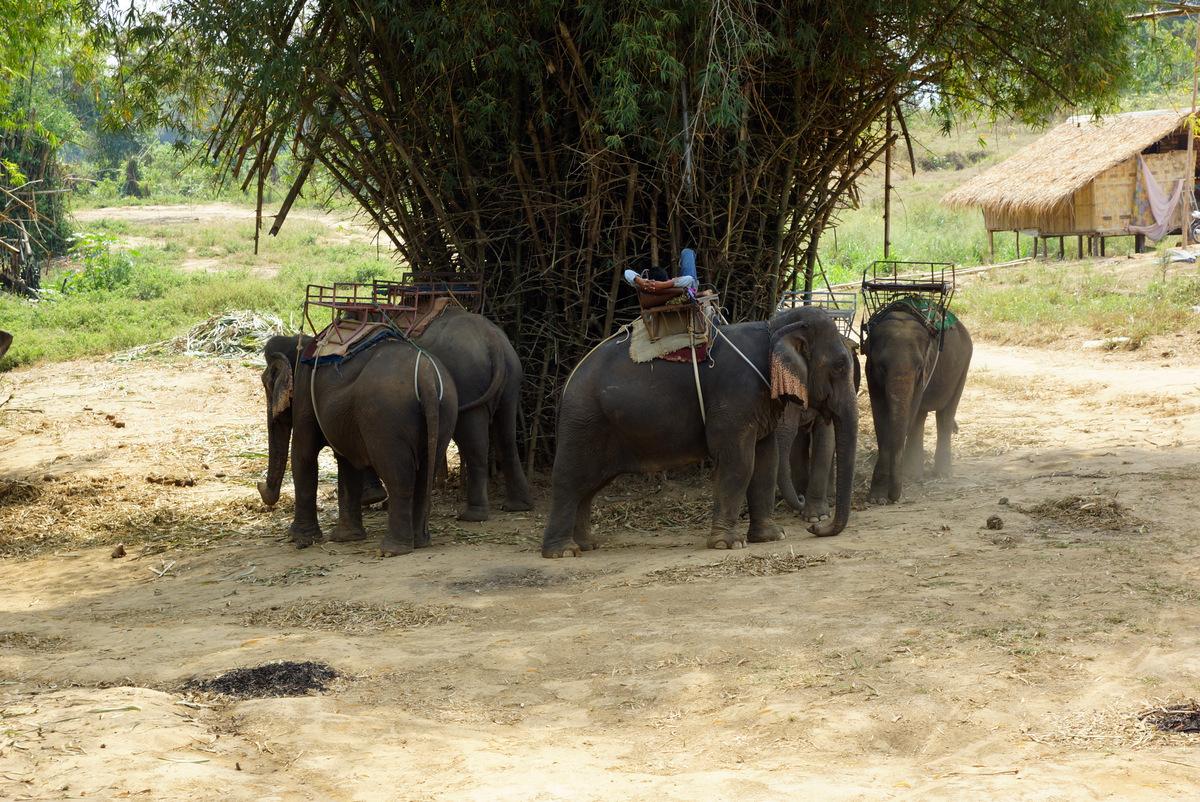 Cztery słonie, zielone słonie….