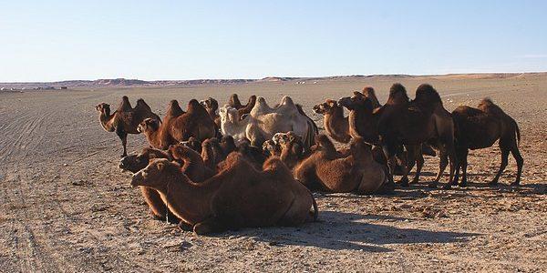 Wieści z Mongolii