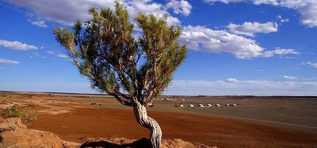 Mongolia – las