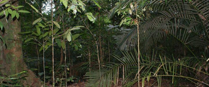 Malezyjska Dżungla