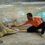 Langawki – farma krokodyli