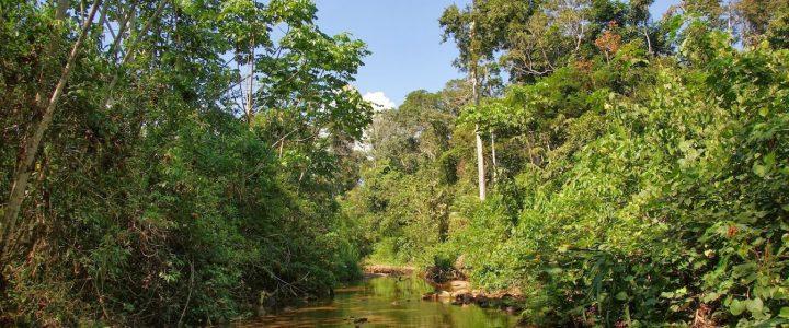 Tigre, czyli podróż do serca dżungli